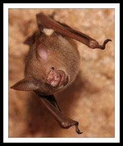 bat-4-sm-844x1024