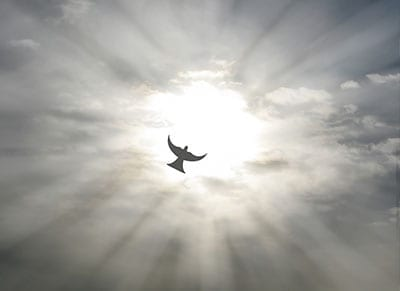 sky angel opt