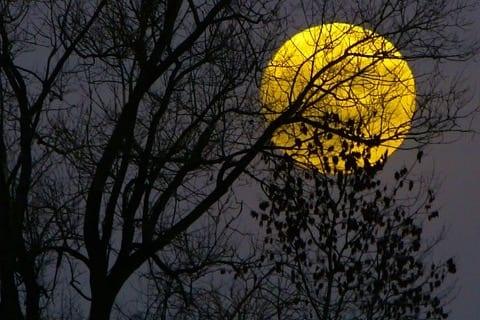 shamamama full moon drumming circle image of harvest moon behind tree